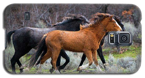 Galaxy S5 Case featuring the photograph Wind In The Manes by Mike Dawson