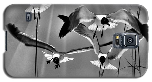 Galaxy S5 Case featuring the photograph Wind Swept Bw by Jan Amiss Photography