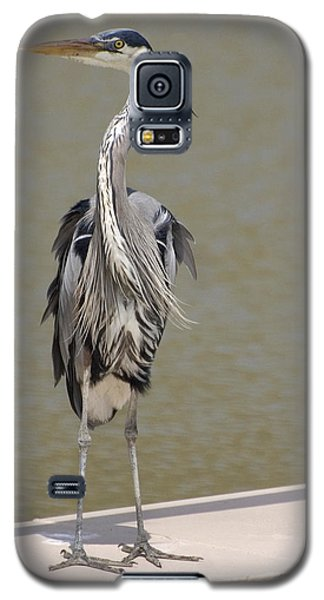 Galaxy S5 Case featuring the photograph Windblown Heron by Kathleen Stephens