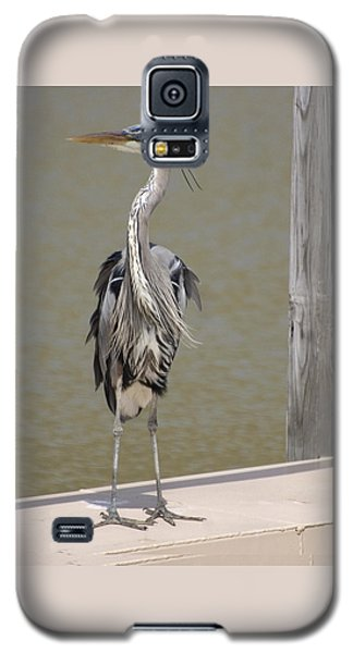Windblown Heron Galaxy S5 Case