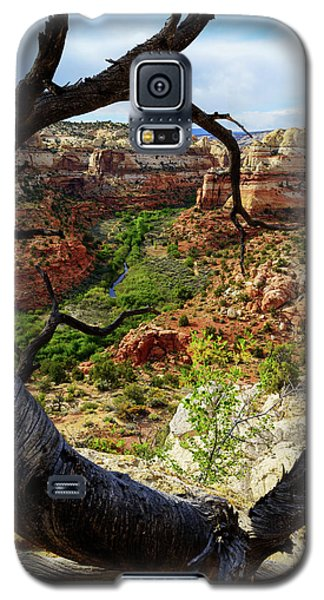 Galaxy S5 Case featuring the photograph Window by Chad Dutson
