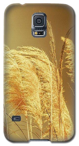 Windswept Autumn Brush Grass Galaxy S5 Case