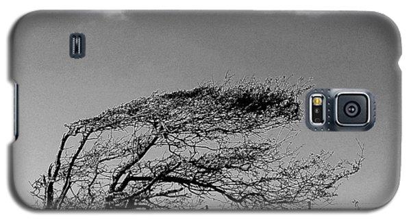 Windswept Galaxy S5 Case