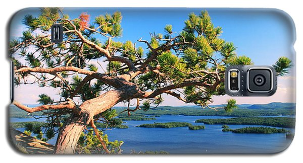 Windswept Pine On Rattlesnake Mountain Galaxy S5 Case
