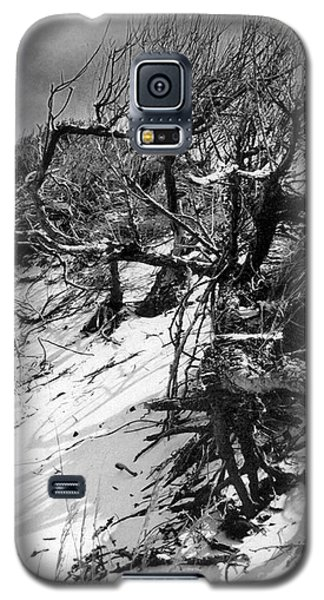 Windswept Trees  Galaxy S5 Case