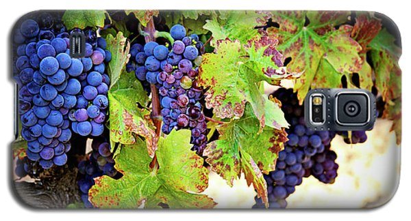 Galaxy S5 Case featuring the photograph Wine Country - Napa Valley California Photography by Melanie Alexandra Price