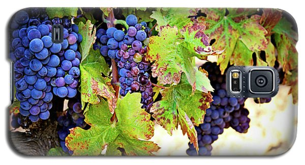 Wine Country - Napa Valley California Photography Galaxy S5 Case