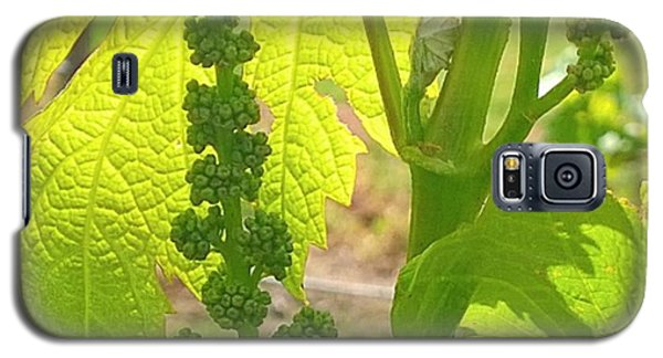 Orange Galaxy S5 Case - #wine On The #vine 😊 #vineyard by Shari Warren