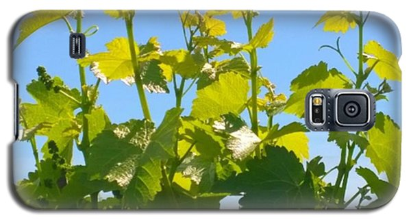Food And Beverage Galaxy S5 Case - #wine #vines Reaching For The Sky :-) by Shari Warren