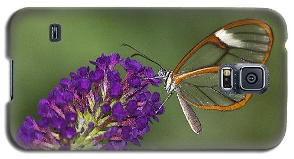 Wings Like Glass Galaxy S5 Case by Ruth Jolly