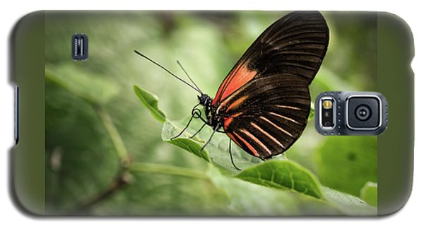 Wings Of The Tropics Butterfly Galaxy S5 Case