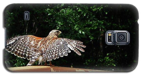 Wingspan Of Hawk Galaxy S5 Case