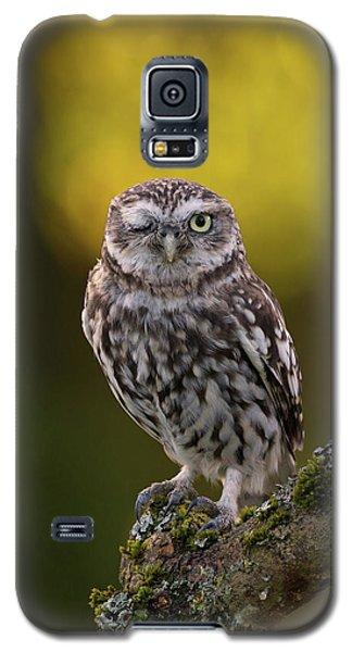 Winking Little Owl Galaxy S5 Case