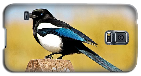 Winking Magpie Galaxy S5 Case by Mitch Shindelbower