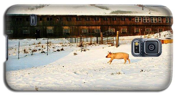 Winnie At Heartland Farm Sanctuary Galaxy S5 Case