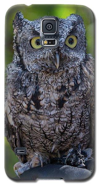 Winston Wildlife Art By Kaylyn Franks Galaxy S5 Case