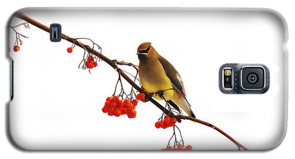 Winter Birds - Waxwing  Galaxy S5 Case