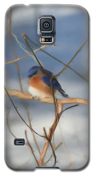 Winter Bluebird Art Galaxy S5 Case by Smilin Eyes  Treasures