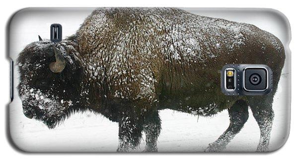 Winter Buffalo Galaxy S5 Case