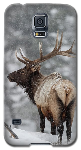 Winter Bull Elk Galaxy S5 Case