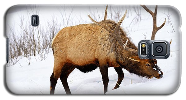 Galaxy S5 Case featuring the photograph Winter Bull by Greg Norrell