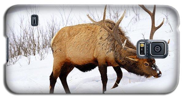 Winter Bull Galaxy S5 Case