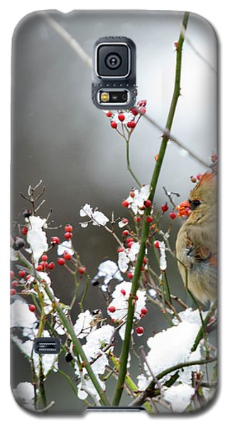 Galaxy S5 Case featuring the photograph Winter Cardinal by Gary Wightman