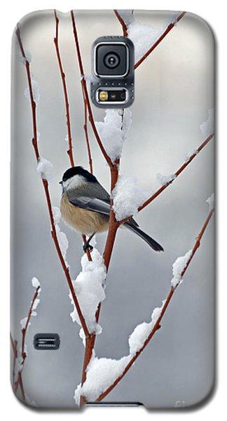 Winter Chickadee Galaxy S5 Case by Diane E Berry