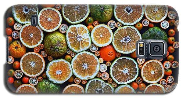 Winter Citrus Mosaic Galaxy S5 Case