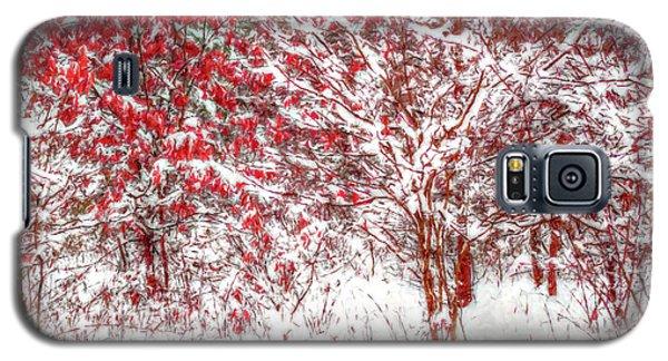 Winter Color  Galaxy S5 Case by Randy Steele