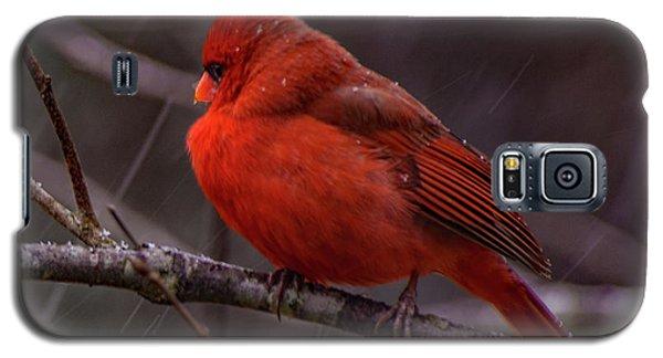 Winter Crimson  Galaxy S5 Case