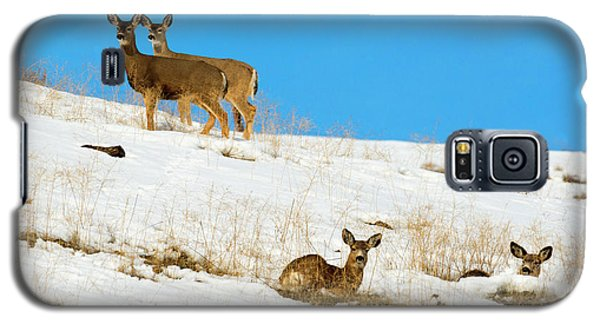 Galaxy S5 Case featuring the photograph Winter Deer by Mike Dawson