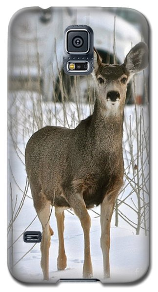 Winter Deer On The Tree Farm Galaxy S5 Case