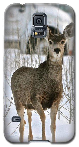 Winter Deer On The Tree Farm Galaxy S5 Case