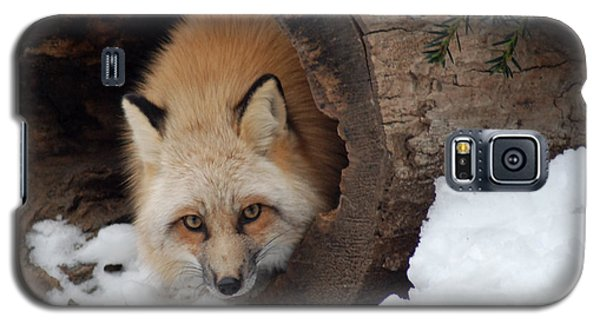 Winter Fox Galaxy S5 Case