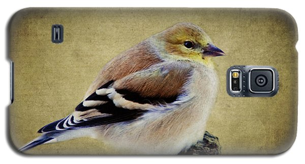 Winter Goldfinch Galaxy S5 Case