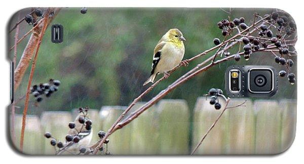 Winter Goldfinch In The Rain Galaxy S5 Case
