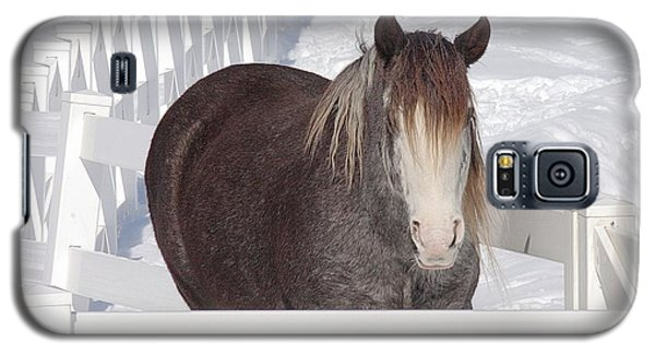 Winter Horse Galaxy S5 Case by Debbie Stahre