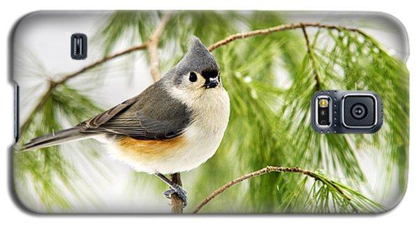 Winter Pine Bird Galaxy S5 Case