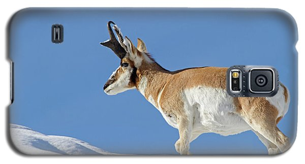 Winter Pronghorn Buck Galaxy S5 Case
