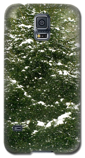Winter Shines Over Pine Galaxy S5 Case