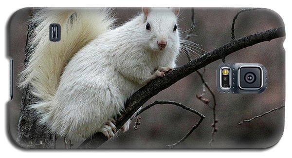 Winter Squirrel Galaxy S5 Case