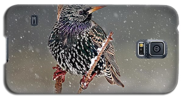 Winter Starling 2 Galaxy S5 Case