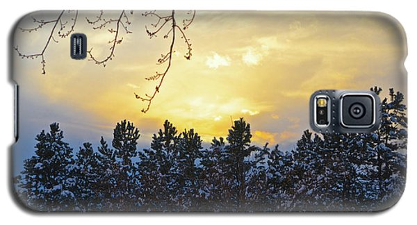 Winter Sunset On The Tree Farm #1 Galaxy S5 Case