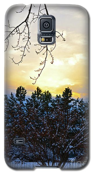 Winter Sunset On The Tree Farm #2 Galaxy S5 Case