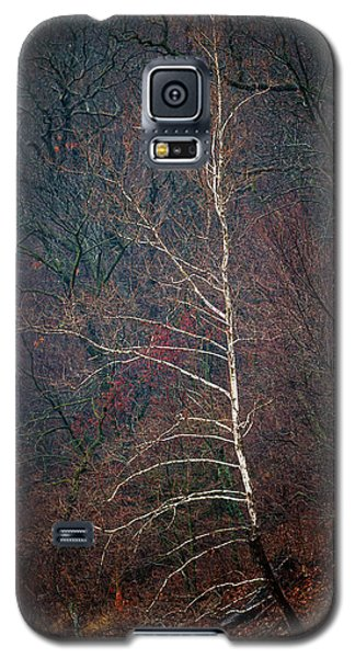 Winter Sycamore Galaxy S5 Case