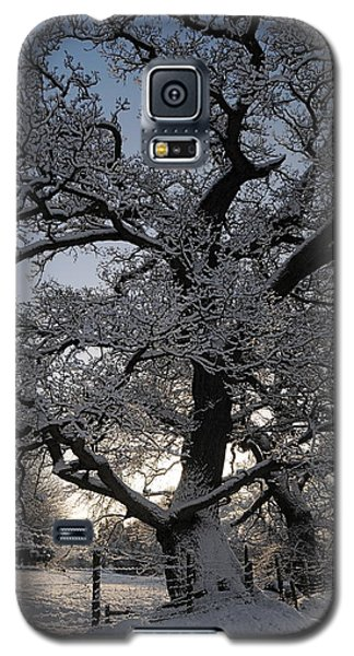Winter Tree In North Wales Galaxy S5 Case