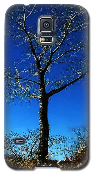 Winter Tree Galaxy S5 Case