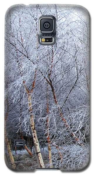 Winter Trees Galaxy S5 Case by Jacqi Elmslie