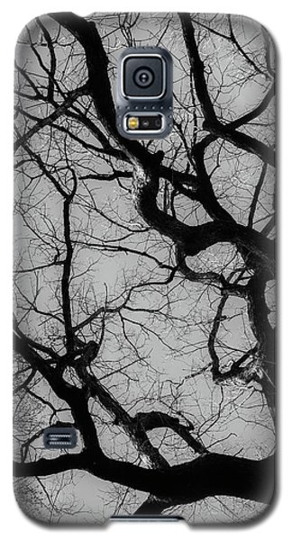 Winter Veins Galaxy S5 Case
